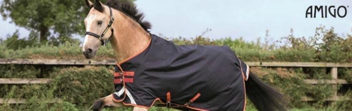 Horse wearing an Amigo blanket rug
