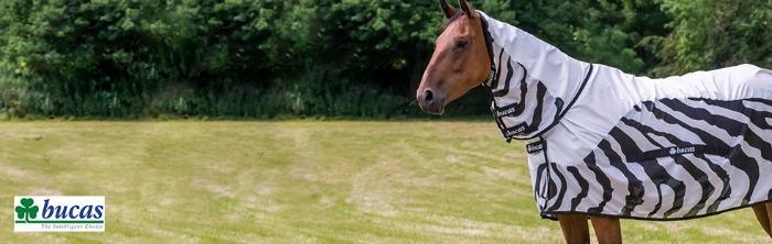 Horse wearing a Bucas zebra blanket