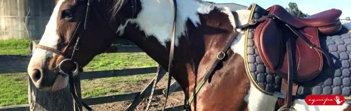 Equipe equestrian equipment