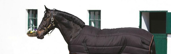 Horse Health & Wellbeing