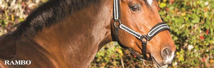 horse wearing Rambo equipment