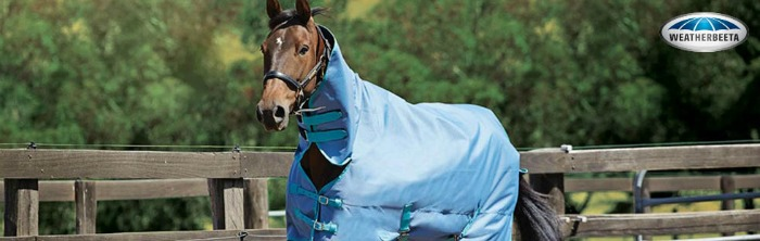 Horse wearing Weatherbeeta turnout blanket
