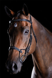 Collegiate Comfitec Fancy Stitch Bridle - Black