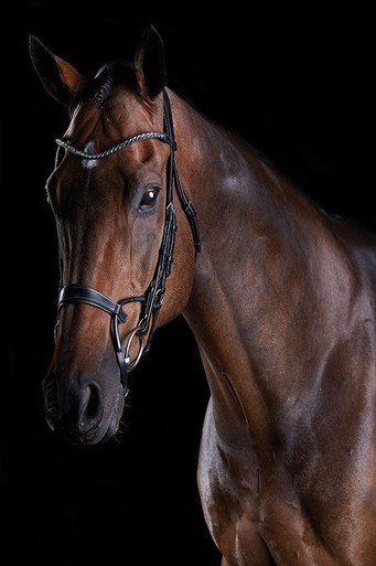 Collegiate Comfitec Crystal Bridle In Black