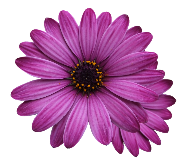 flower-marigolds-3192686-640.png