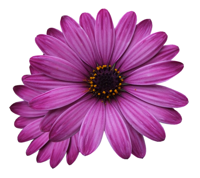 flower-marigolds-3192686-640b.png