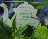 Lemon Mint Tea Seed Kit