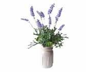 "18"" Lavender in Ceramic Jug"