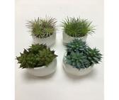 """3.5"""" Ceramic Succulent in Planter"""