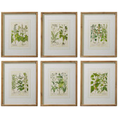 "20.5"" Framed Botanical Print Asst"