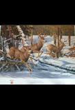Pride of Pagosa - Mule Deer - Pride of Pagosa - Mule Deer