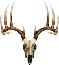 Mossy Oak Skull Series Whitetail Typical Decal