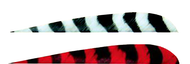 """Trueflight 4"""" RW Barred Feathers 6-Gray 12-Red - 18 Pieces Feathers"""