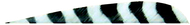 """Trueflight 4"""" RW Barred Feathers 6-Gray 12 Chartrese - 18 Pieces Feathers"""
