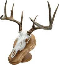 Walnut Hollow Deluxe Euro Skull Display Kit Mounting Kit