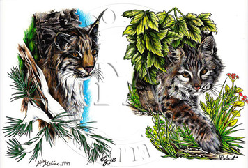 Lynx & Bobcat designs by this Indiana tattooist.  Color (includes line drawings) 11 x 17