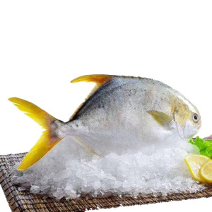 Frozen Golden Pompano Fish XL ~750 gr