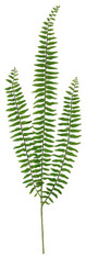 "30.5""L BOSTON FERN SPRAY - TT GREEN"