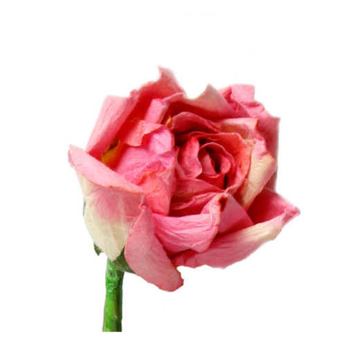 Long Stem Handmade Rose in Bright Pink