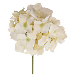 Variegated Long Stem Hydrangea Flowers in Ivory