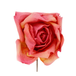 Short Stem Rose in Pink and Peach Set of 6 Roses