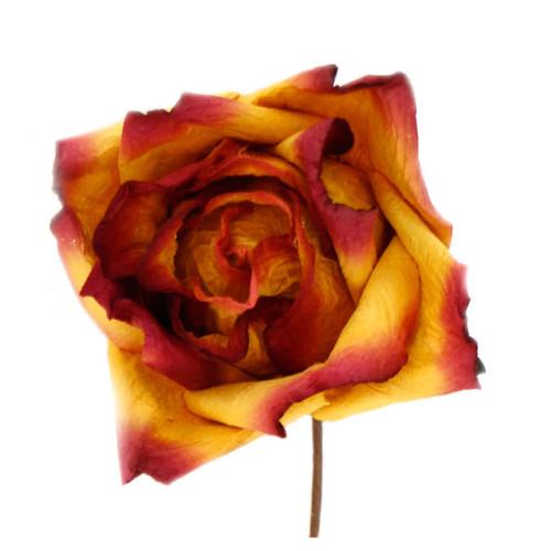 Short Stem Rose in Burgandy Gold Set of 6 Roses