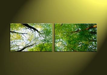Canvas Prints, scenery canvas prints, scenery wall art, forest wall art, scenery art work