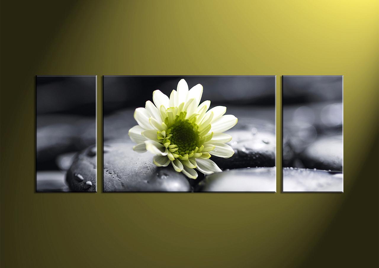 3 Piece White Flower Canvas Photography,Wide Decor Art Black White
