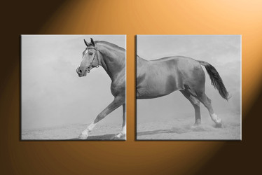 home decor, 2 Piece Wall Art, horse multi panel art, black and white  canvas art, animal multi panel art