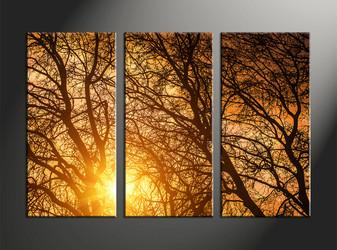 forest large pictures,home décor, 3 piece canvas art prints, scenery canvas art prints, sunrise huge canvas art