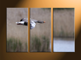 home decor, 3 piece canvas art prints, wildlife canvas print, bird large pictures, wildlife wall decor