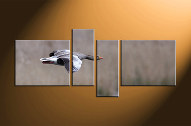 home decor, 4 piece canvas art prints, wildlife pictures, bird large pictures, wildlife canvas art prints