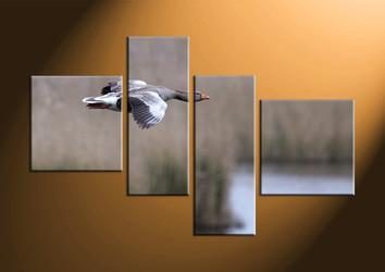 home decor, 4 piece canvas art prints, wildlife canvas photography, bird large pictures, wildlife canvas art prints