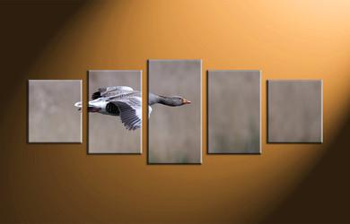 home decor, 5 piece canvas art prints, wildlife canvas photography, bird large pictures, wildlife canvas art prints