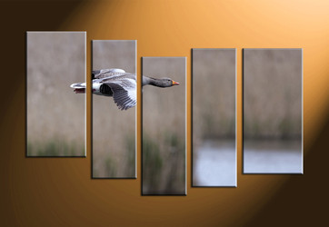 home decor, 5 piece canvas art prints, wildlife canvas print, bird large pictures, wildlife canvas art prints