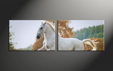 home decor, 2 piece canvas art prints, animal canvas print, horse canvas photography, wildlife art
