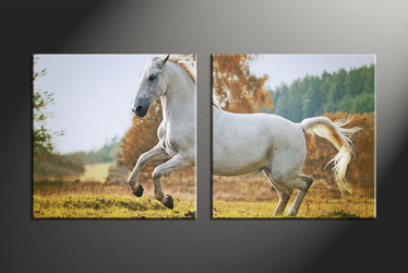home decor, 2 piece pictures, animal canvas print, horse canvas photography, wildlife canvas wall art