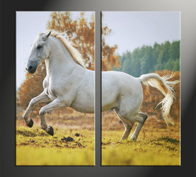home decor, 2 piece canvas art prints, animal canvas print, horse canvas photography, wildlife large pictures