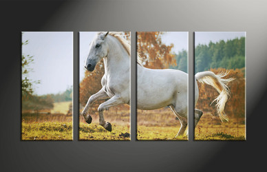 home decor, 4 piece canvas art prints, animal canvas print, horse canvas photography, wildlife large pictures
