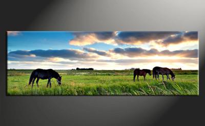 1 piece canvas photography, home decor art, wildlife canvas art print, horse wildlife huge pictures