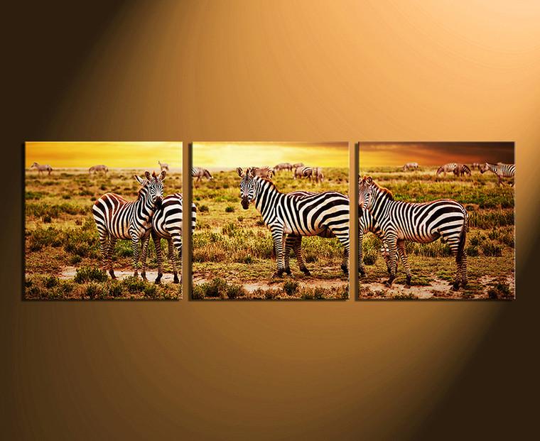 3 piece canvas wall art, home decor, wildlife canvas photography, zebra canvas print, wildlife multi panel canvas