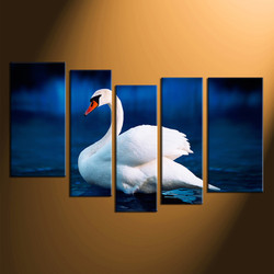5 piece photo canvas, swan canvas wall art, home decor, wildlife canvas print, wildlife huge canvas print