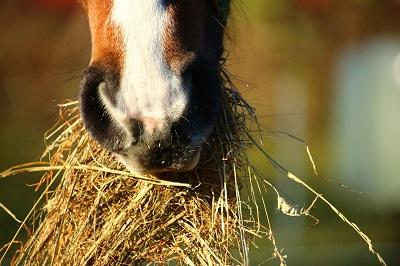 horse-1074867-1920low-res.jpg