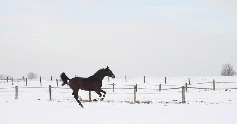 horse-426407-1920-v2.jpg