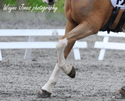 horse-legs-web.jpg