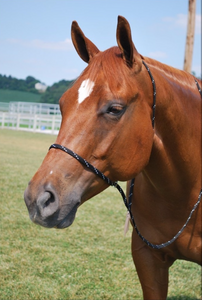 Slip this quick catch halter in your back pocket, to make easy work of that hard to catch horse.