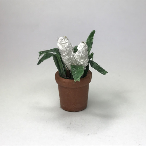 White hyacinth in terracotta pot