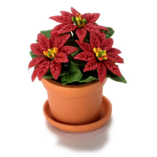 Triple red bloom poinsettia in terra cotta pot with saucer