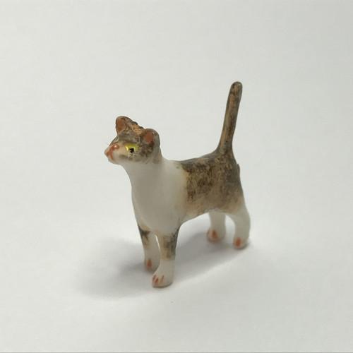 Miniature tabby kitten