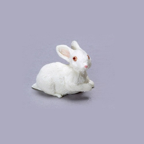 Sweet miniature white bunny rabbit